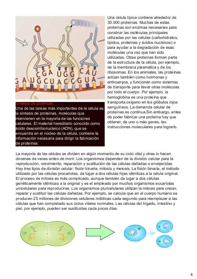 Síntesis de proteínasUna de las tareas más importantes de la célula esla síntesis de proteínas, moléculas queintervienen e...
