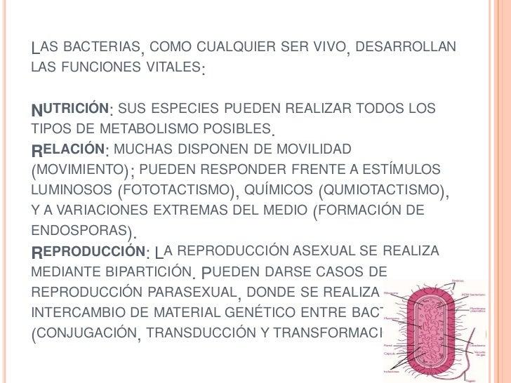 Arqueobacterias reproduccion asexual de las plantas