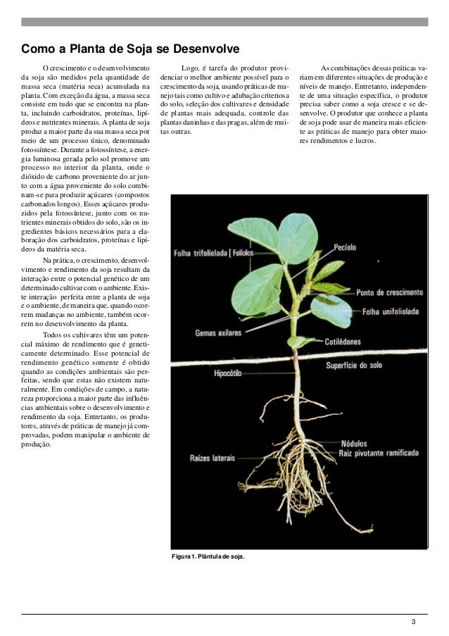 3 Figura 1. Plântula de soja. O crescimento e o desenvolvimento da soja são medidos pela quantidade de massa seca (matéria...