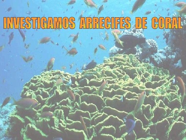 INVESTIGAMOS  ARRECIFES  DE  CORAL
