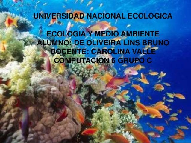UNIVERSIDAD NACIONAL ECOLOGICA  ECOLOGIA Y MEDIO AMBIENTEALUMNO: DE OLIVEIRA LINS BRUNO   DOCENTE: CAROLINA VALLE    COMPU...