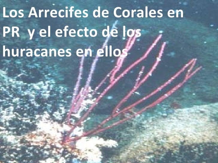 Los Arrecifes de Corales en PR  y el efecto de los huracanes en ellos