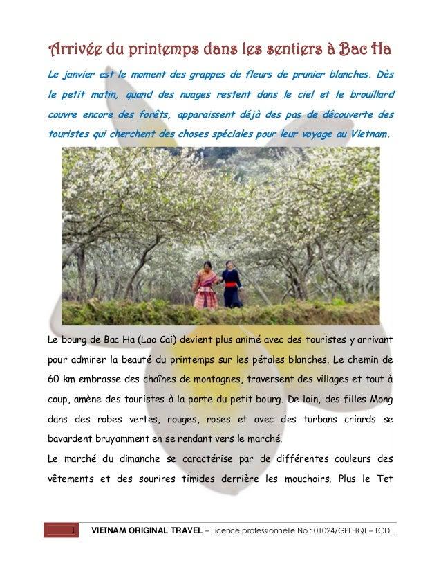 Arrivée du printemps dans les sentiers à Bac Ha Le janvier est le moment des grappes de fleurs de prunier blanches. Dès le...