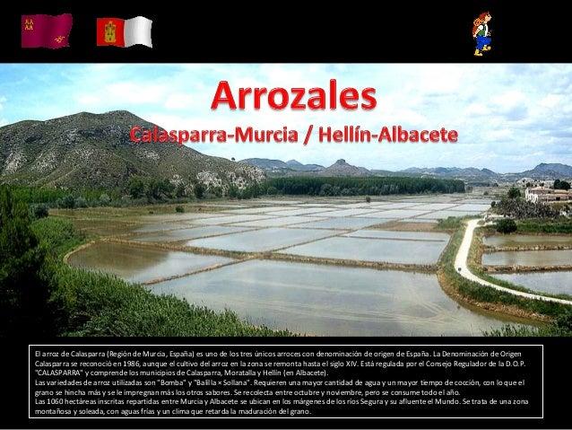 El arroz de Calasparra (Región de Murcia, España) es uno de los tres únicos arroces con denominación de origen de España. ...