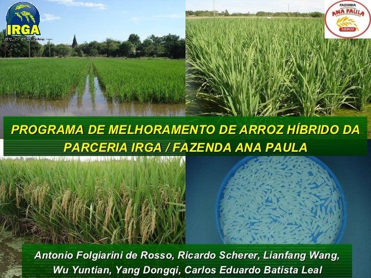 PROGRAMA DE MELHORAMENTO DE ARROZ HÍBRIDO DA PARCERIA IRGA / FAZENDA ANA PAULA Antonio Folgiarini de Rosso, Ricardo Schere...