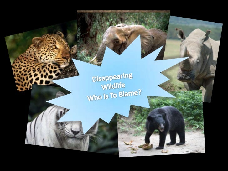 Disappearing Wildlife<br />Who is To Blame? <br />