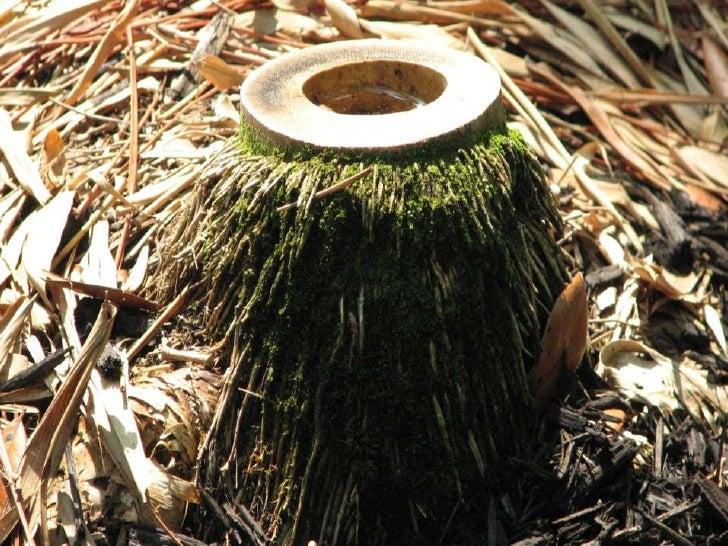 Art Bamboo Slide 3