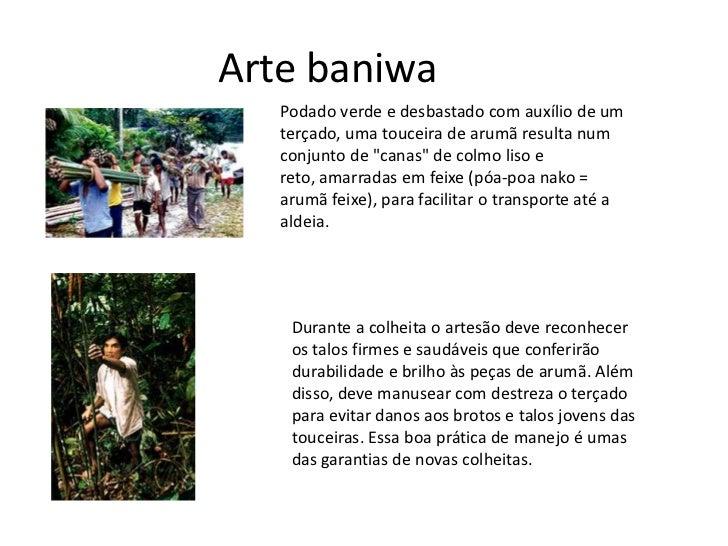 """Arte baniwa<br />Podado verde e desbastado com auxílio de um terçado, uma touceira de arumã resulta num conjunto de """"canas..."""