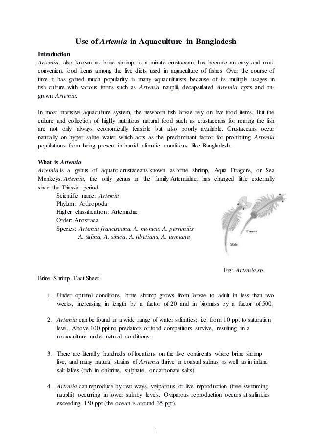 brine shrimp environmental conditions