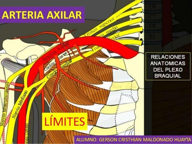 arteria-axilar-2-638.jpg?cb=1442194640