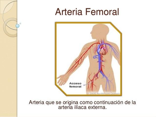Arteria FemoralArteria que se origina como continuación de laarteria ilíaca externa.
