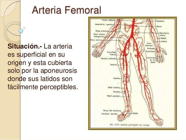 arteria-femoral-4-638.jpg?cb=1505607942