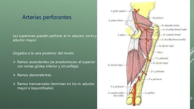 Arteria femoral y poplitea