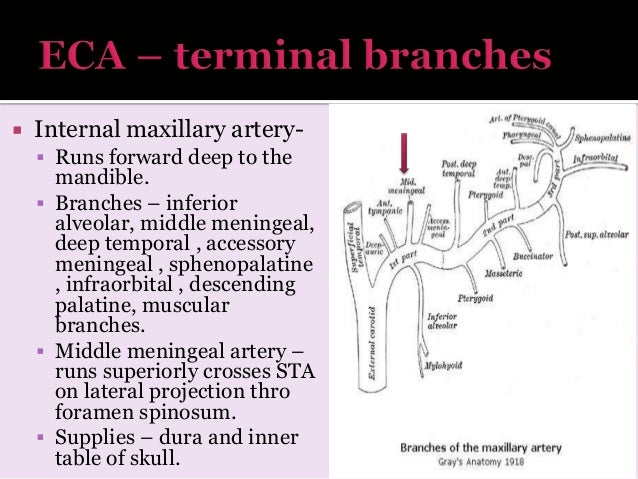 radiology Arterial and venous supply of brain neuroimaging part 1