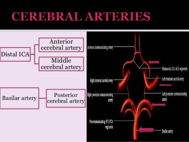 Anatomy vertebral
