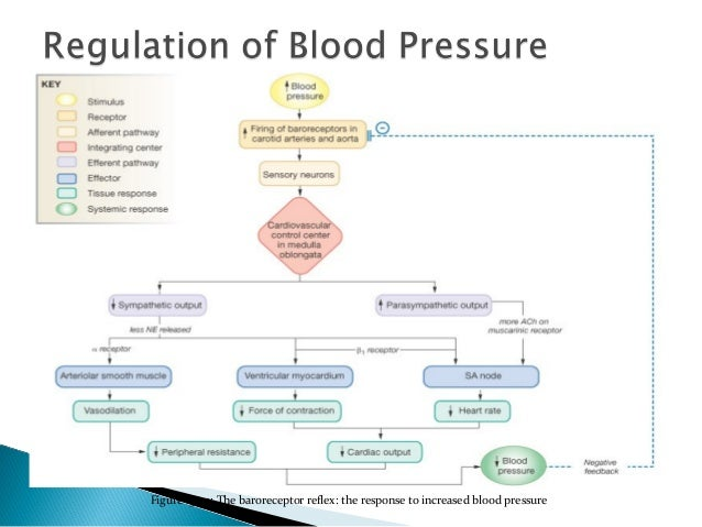 how to calculate mean arterial blood pressure