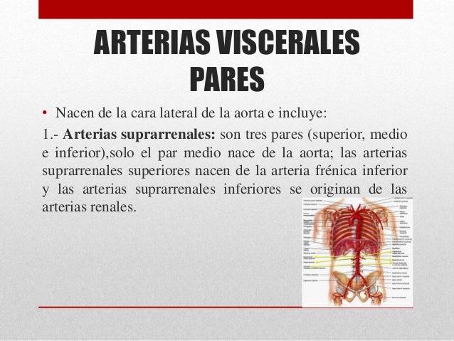 ARTERIAS DE LA AORTA ABDOMINAL Y MIEMBRO INFERIOR.
