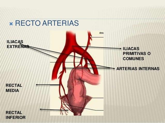Arterias ABDOMINALES, PELVIS Y EXTREMIDADES INFERIORES
