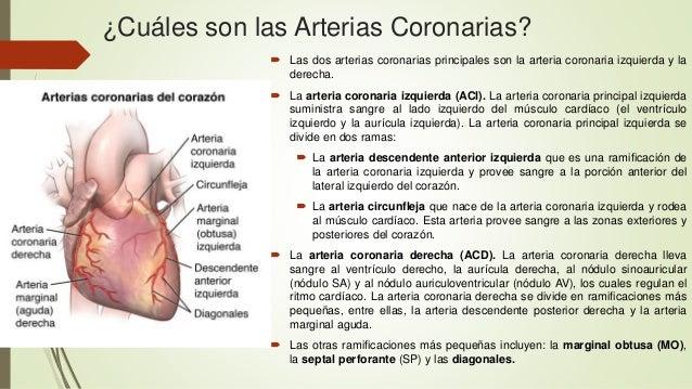 Arterias coronarias, circulación sanguínea del corazón, y sus arterias