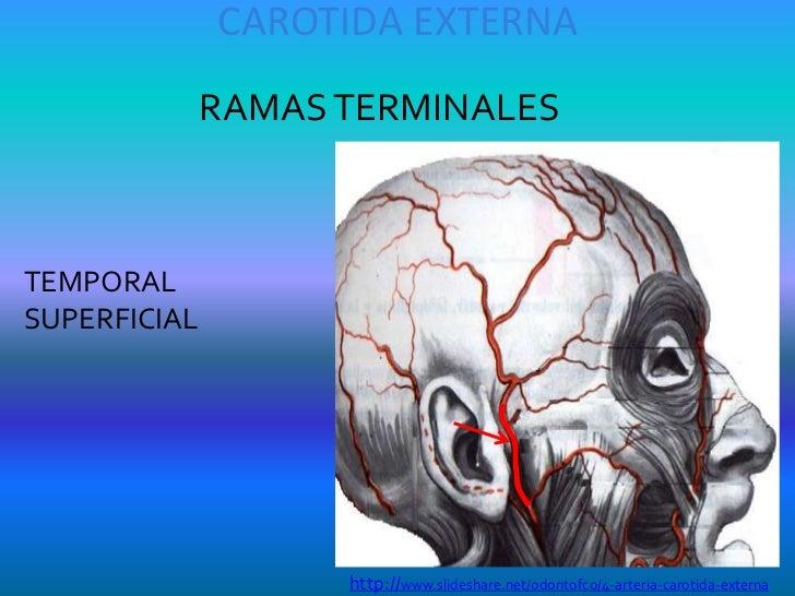Arterias de la Cabeza Y Cuello