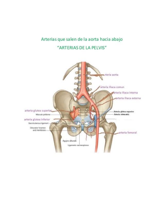 Erfreut A. Iliaca Interna Anatomie Fotos - Anatomie Von Menschlichen ...