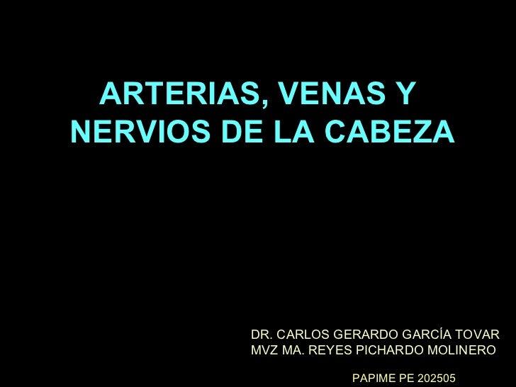 ARTERIAS, VENAS Y  NERVIOS DE LA CABEZA DR. CARLOS GERARDO GARCÍA TOVAR MVZ MA. REYES PICHARDO MOLINERO PAPIME PE 202505