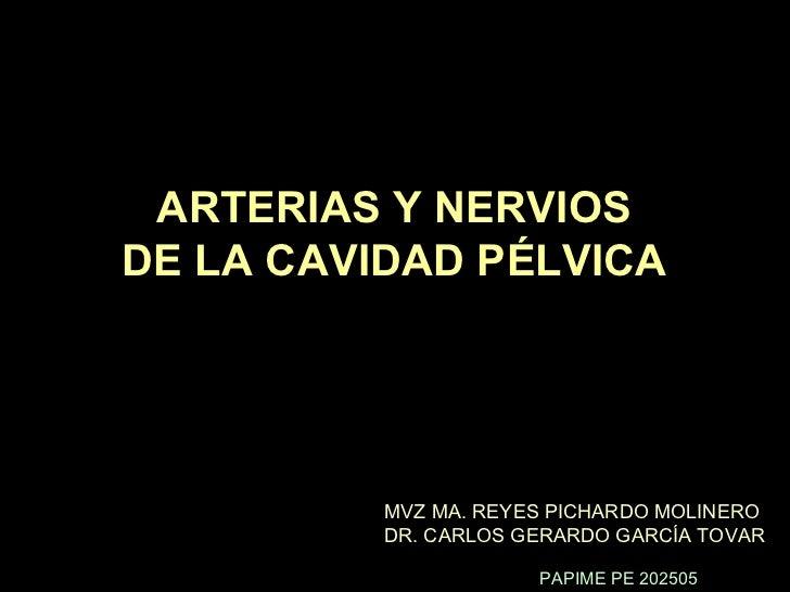 ARTERIAS Y NERVIOS DE LA CAVIDAD PÉLVICA MVZ MA. REYES PICHARDO MOLINERO DR. CARLOS GERARDO GARCÍA TOVAR PAPIME PE 202505
