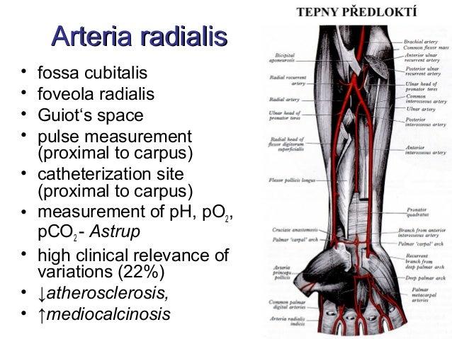 Arteria Astrup