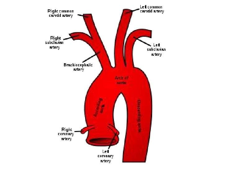 Diagram Of Upper Body Arteries Block And Schematic Diagrams
