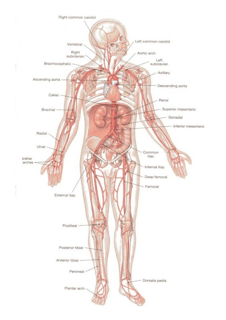 Rubzzzz\'s notes on Artery system