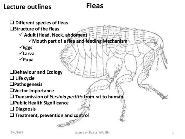 Lecture outlines  Different species of fleas Structure of the fleas  Adult (Head, Neck, abdomen) Mouth part of a flea ...