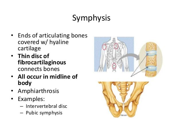 Arthrology The structural classification of joints is based on the composition of the binding material and the presence or absence of a joint cavity. arthrology