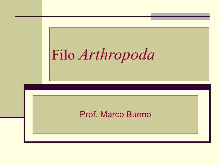 Filo  Arthropoda Prof. Marco Bueno