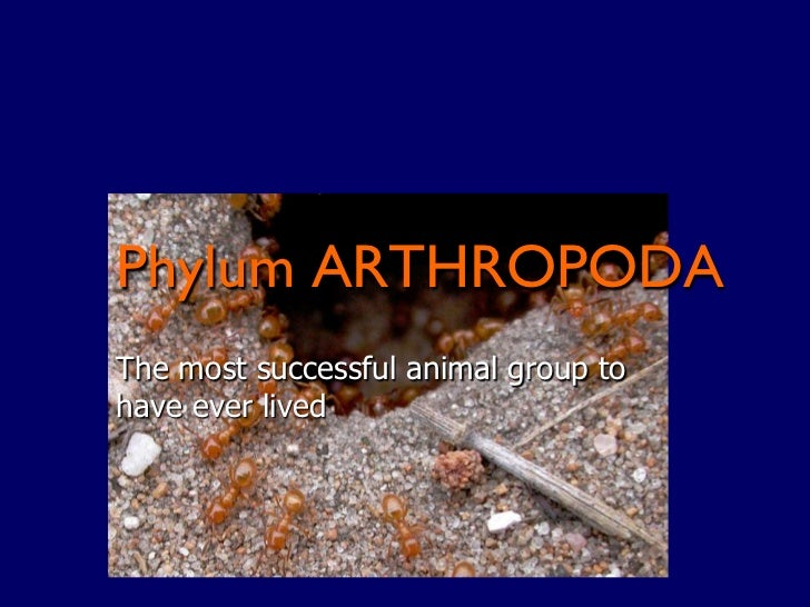 Phylum ARTHROPODAThe most successful animal group tohave ever lived