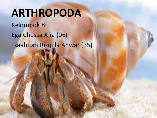 500 Contoh Gambar Hewan Arthropoda Terbaik