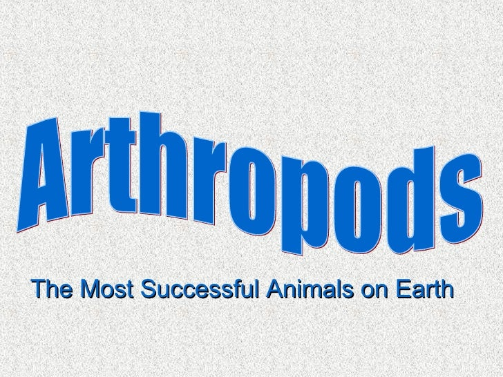 Arthropods The Most Successful Animals on Earth