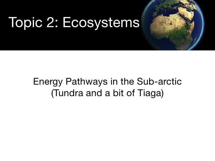 Topic 2: Ecosystems       Energy Pathways in the Sub-arctic        (Tundra and a bit of Tiaga)