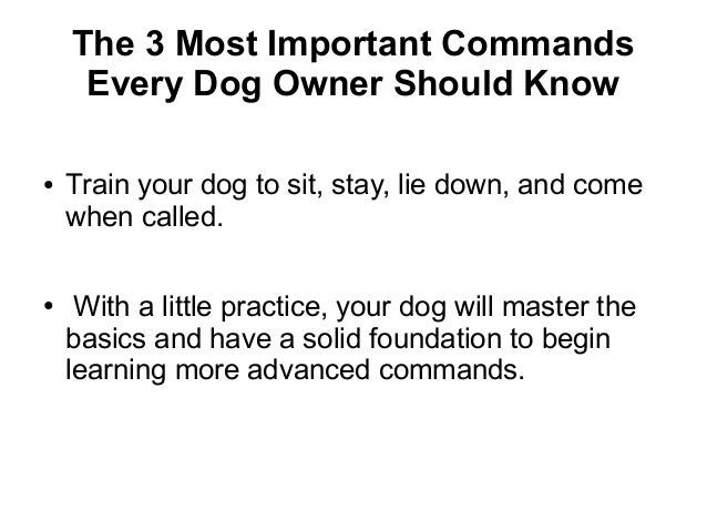 Dog Training Tips- How To Train A Dog At Home