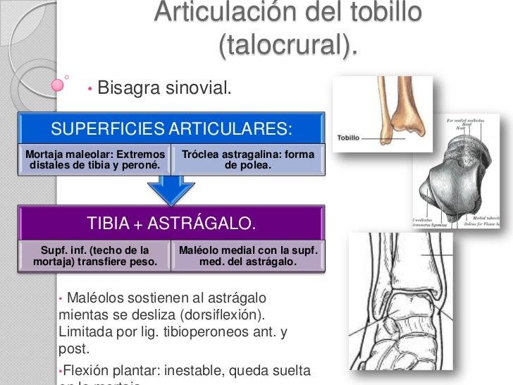 Articulación del tobillo y pie