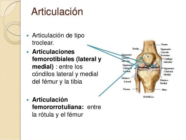 Articulación de rodilla