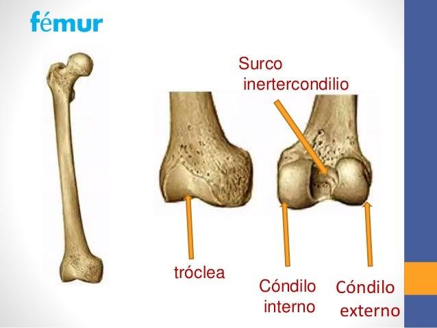 Articulación de rodilla.pptx rene ivan