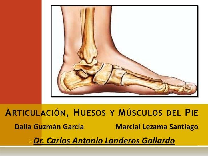 A RTICULACIÓN , H UESOS Y M ÚSCULOS DEL P IE  Dalia Guzmán García      Marcial Lezama Santiago     Dr. Carlos Antonio Lan...