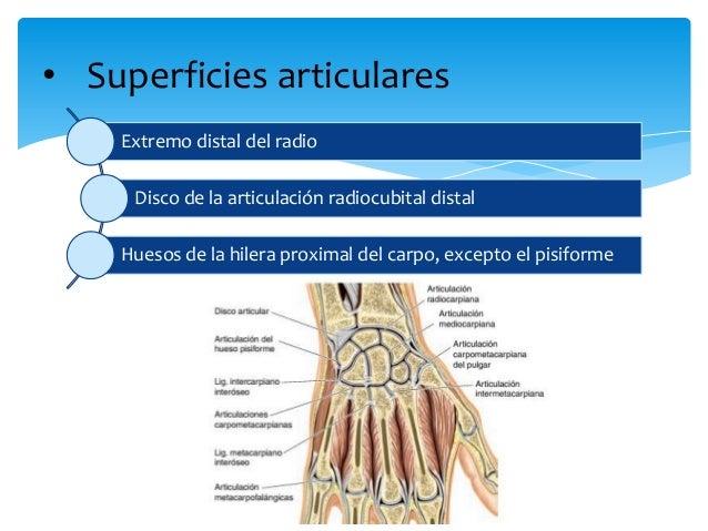 Articulación radiocubital distal