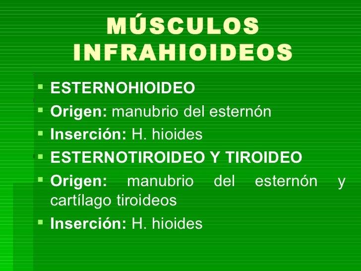 Articulaci n temporomandibular for Esternohioideo y esternotiroideo