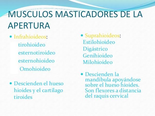 Articulaci n temporomandibular atm for Esternohioideo y esternotiroideo