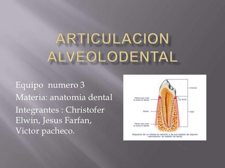 Equipo numero 3Materia: anatomia dentalIntegrantes : ChristoferElwin, Jesus Farfan,Victor pacheco.