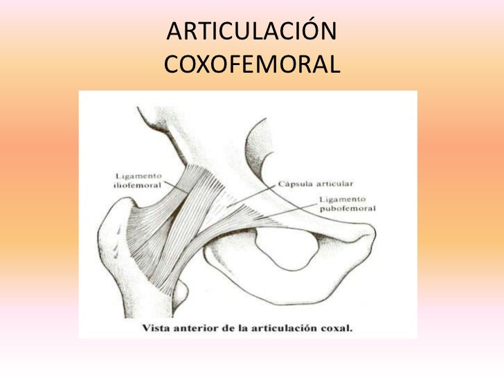 articulacion-coxofemoral-18-728.jpg?cb=1245408383