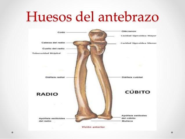 Articulación de Codo y Antebrazo
