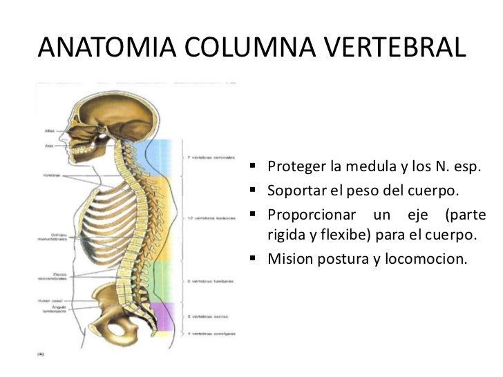 Articulacion de la columna