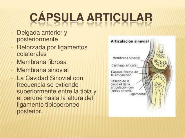 Articulaciones de la cadera. Moore Daley Agur. Anatomía con orientaci…